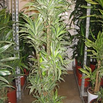 Unsere Pflanzen